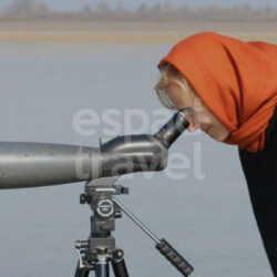 iran birdwatching tour